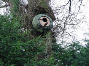 tawny owl nestbox on tree